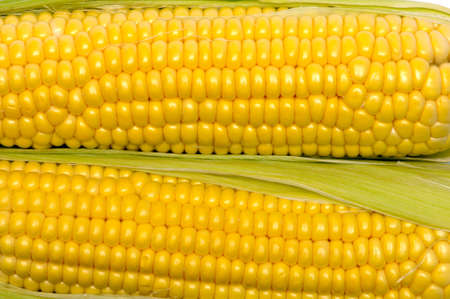 texture of yellow corn cobs photo