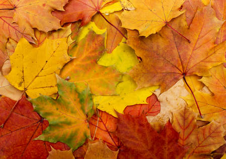 rimmed: Fall leaves for an autumn background Stock Photo