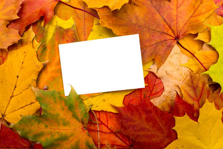 a stem here: autumn leaves and white sheet background