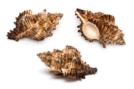 three sea shells on a white background