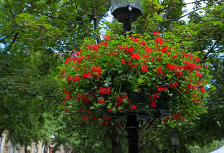 flower baskets: street lamp with hanging flower baskets