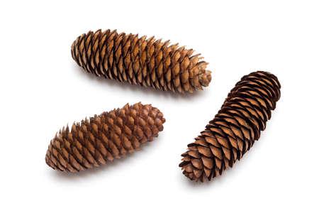 pine three: three pine cones on a white background Stock Photo