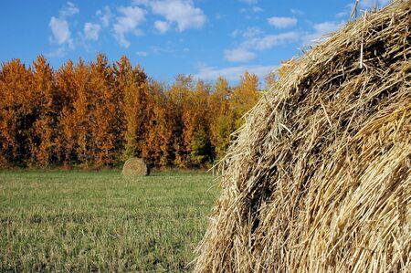 Hay field in autumn. photo