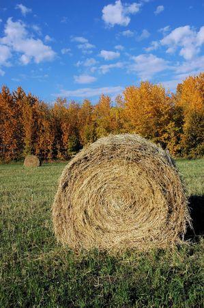 Hay field in autumn.