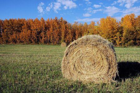 hay field: Fieno campo in autunno.  Archivio Fotografico
