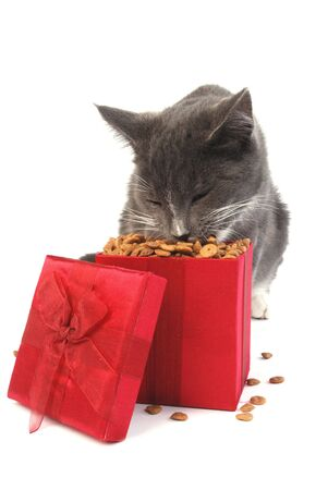 catfood: Grey cat eating food out of a Christmas gift box.