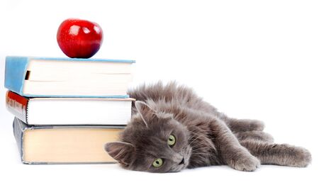 Long haired kitten laying with books.