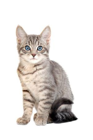 adorable chaton embryonné bleu assis sur fond blanc Banque d'images