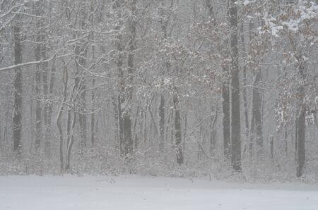 Snowy Forest Stok Fotoğraf