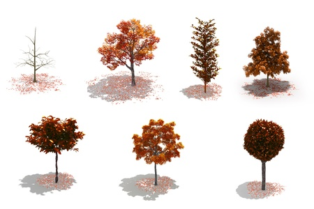 autumn trees: 3d autumn trees pack on white with ground shadows