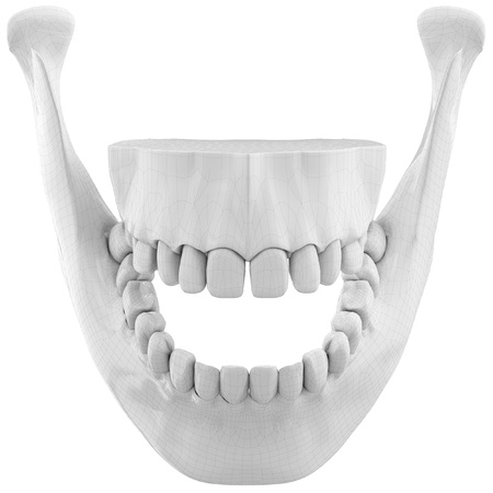 human jaw bone: 3d wireframe over human jaw bone with teeth on white background Stock Photo
