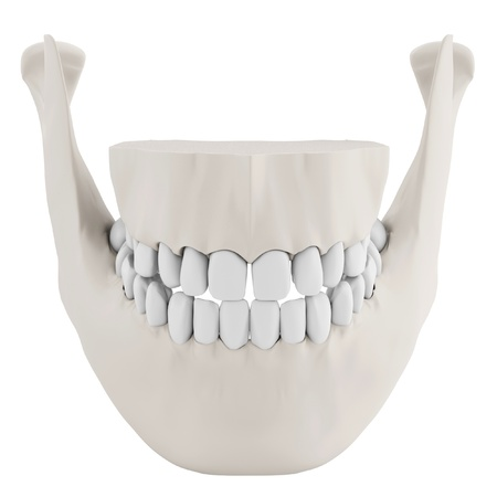 3d human jaw bone closed with teeth on white background Stock Photo