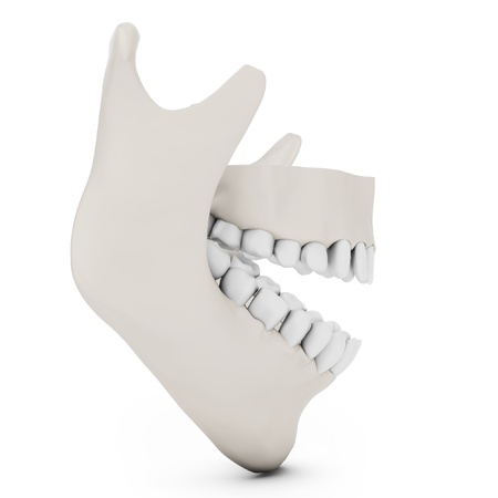 3d human jaw bone opened  with teeth on white background Stock Photo - 18966739