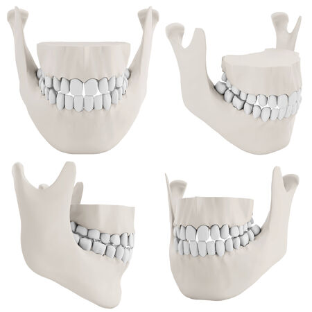 human jaw bone: 3d human jaw bone closed with teeth collection on white background