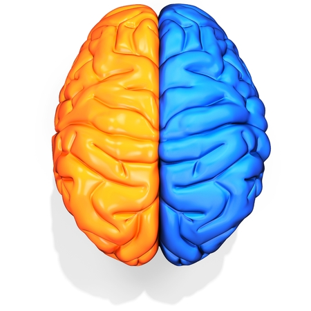 3d detailed brain sides on white background Stock Photo