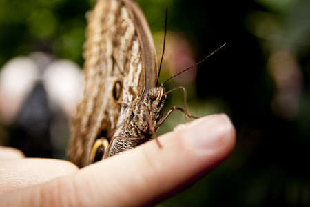 Macro detail of butterfly on the young lady finger photo