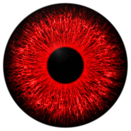 mesmerize: Illustration of human red eye on white background