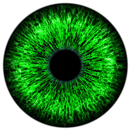 contact details: Illustration of human green eye on white background