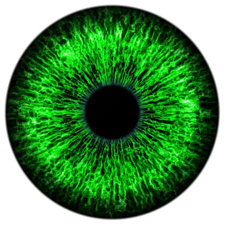 Illustration of human green eye on white background illustration