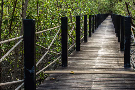 the way to the fresh mangrove forest