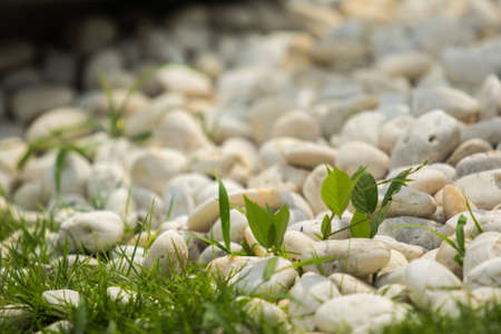 the pattern of the pebble and the grass Stock Photo