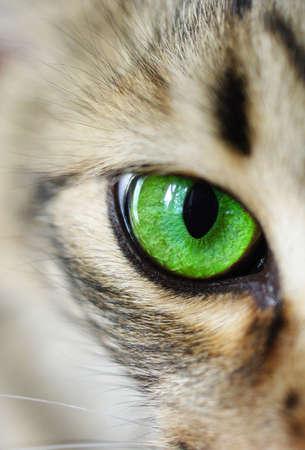 macro: Cats eye green macro Stock Photo