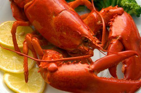 lobster dinner: Lobster close-up