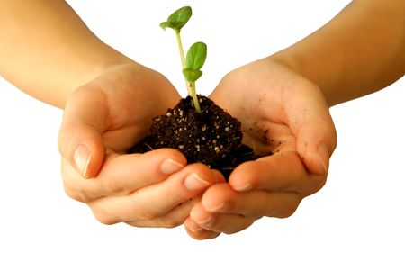 Organic seeds Stock Photo - 2599502