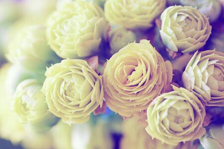 Kalanchoe 꽃 매크로 스톡 콘텐츠