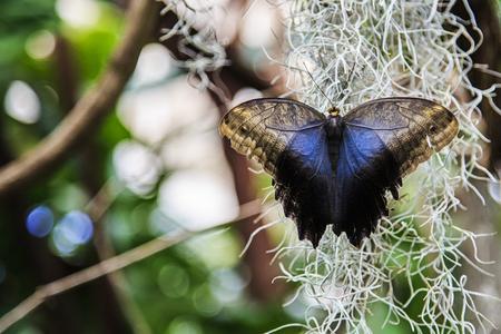 열린 날개 올빼미 나비 스톡 콘텐츠