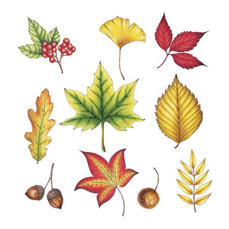 손으로 그린 가을 잎