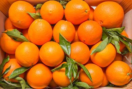 valencia orange: Top view of tasty spanish oranges freshly collected on a wooden box