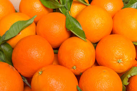 valencia orange: Closeup of tasty spanish oranges freshly collected