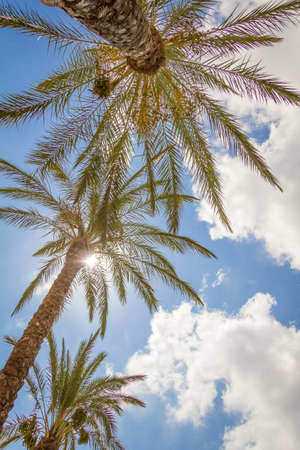 Tropical background of palm trees over a cloudy blue sky on summer photo