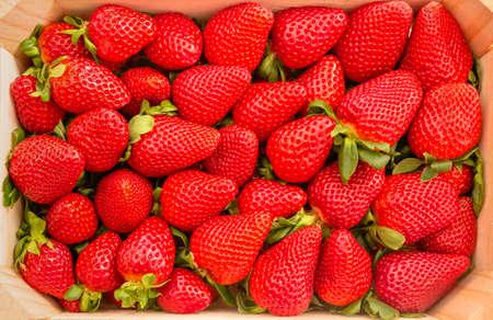 Gros plan de savoureuses fraises espagnoles fraîchement recueillies sur une vue de dessus boîte en bois