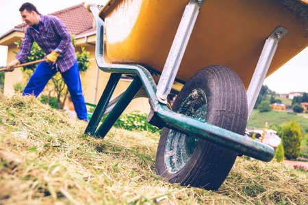 hard work: Closeup of yellow wheelbarrow in the field and young man with gloves raking hay on the background