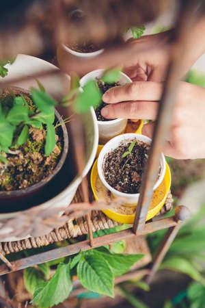 집 테라스의 안쪽 도시 정원에 젊은 묘목 심기 여자의 근접 촬영 손