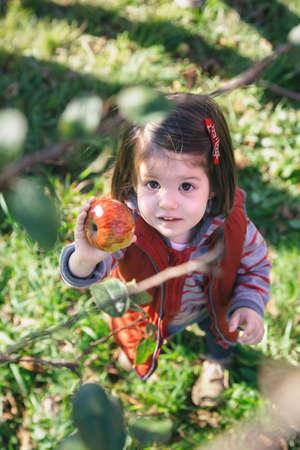 manzana roja: Retrato de la niña adorable que sostiene la manzana orgánica fresca en la mano. Ver a través de las ramas de los árboles.