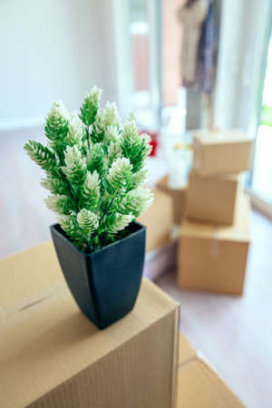 Moving with plant and stacked boxes