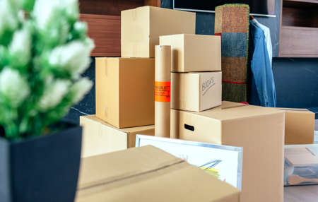 Moving with stacked boxes and plant Stock Photo