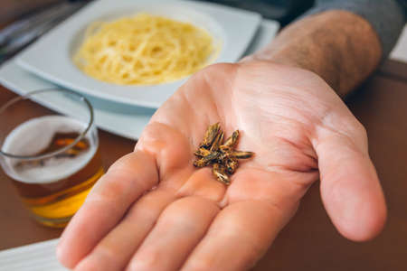 Man's hand showing a handful of crickets ready to eat Stockfoto