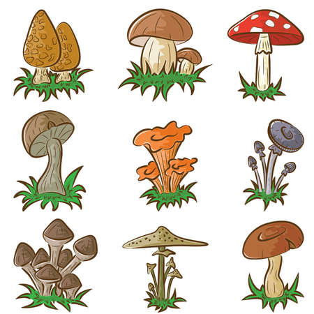 chanterelle:  color set of different cute mushrooms