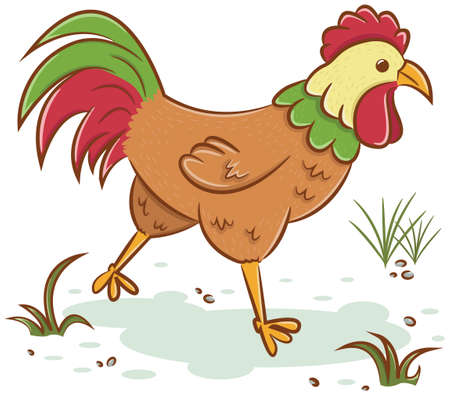 cute animal cartoon: Beautiful rooster isolated on white background