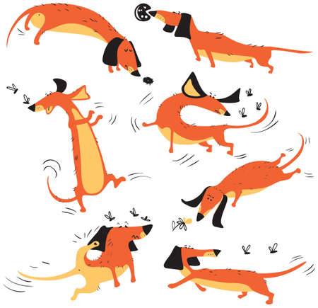 perros graciosos: Funny dachshunds playing with insects isolated on white background.  Happy smart vector dogs collection.