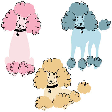 cute dog: Cartoon doodle poodles isolated on white background. Vector illustration of cute purebred dogs. Illustration
