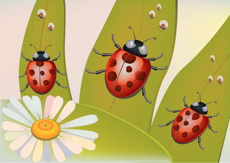 crawlies: Beetles