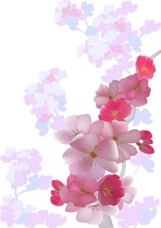 Cherry  postcard Stock Vector - 13659032