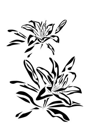 lily  tattoo   Vector