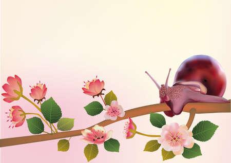 sakura ,snaill, spring , postcard   Stock Vector - 15311669