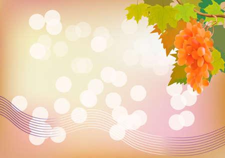 Autumn grape is very tasty   postcard Stock Vector - 16239925